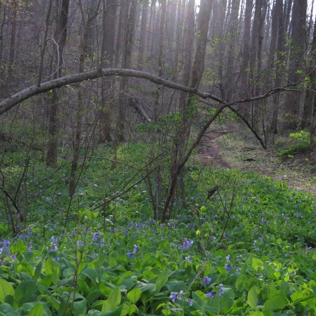 Blubell Trail